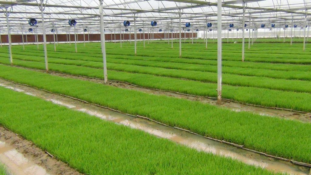 育苗基质是生产高品质农产品的关键因素。育苗基质的功能应与土壤相似,选择草炭土作为基质最好,无论是种植蔬菜,花卉苗木,育苗植株才能更好的适应环境,快速生长。 1、要求育苗基质基本上不含活的病菌、虫卵,不含或尽量少含有害物质,以防其随苗进入生长田后污染环境与食物链。为了符合这个标准,育苗基质应达到杀菌杀毒、去除虫卵的目的。  2、从营养条件和生长环境方面来讲,基质比土壤更有利于植株生长。使用育苗基质需要间隔一定距离,保持育苗植株生长所需的空气流通,利于根系快速生长缩短生长周期。 3、播种:细小的种粒在播种是一